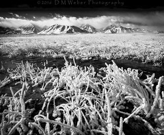 Hot Spring Frost Fest (DM Weber) Tags: california bw white storm black monochrome canon landscape frozen warm frost mt freezing marion sierra mount springs sierras morgan morrison eastern laurel clearing tempatures eos5dmk2 psa148 dmweber