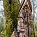 Doon Hill - Fairy House