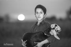 A nomad's portrait (Ali's Photograpy) Tags: pakistan boy sunset portrait blackandwhite sun classic beauty rural nikon bokeh goat d750 nomad punjab nikkor f28 70200mm jhelum nogran naugran nougran
