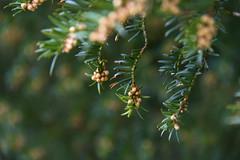 Signs of Spring (Infomastern) Tags: lund spring botanicgarden barr vr botaniskatrdgrden