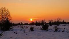 Fagnes - 09 - Orange sunny (Ld\/) Tags: winter sunset mars orange sun snow nature beauty march belgium belgique belgie top hiver ardennen coucher explore venn hoge malmedy hautes fagnes naturelle wallonie 2016 venen hohes waimes rserve jalhay wallone weismes