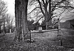 Within and Without (drei88) Tags: life fence death boundary struggle fenceline