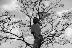 o resgate da pipa (suelyfurukita) Tags: branco kids pb preto e infancia rvore pipa infncia arlivre monocromtico