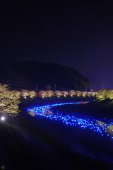20160305-DSC_2289.jpg (d3_plus) Tags: street sea sky plant flower nature japan spring nikon scenery nightshot cloudy bloom  cherryblossom  sakura lightup nightview 28105mmf3545d nikkor    shizuoka    izu   28105   rapeblossom    28105mm  zoomlense  minamiizu    kawazuzakura    28105mmf3545 d700 281053545  nikond700 shimokamo aiafzoomnikkor28105mmf3545d nightcherryblossom 28105mmf3545af    southcherryblossomandrapeblossomfestival aiafnikkor28105mmf3545d shootingstarsandsakurainnight sakurainnight