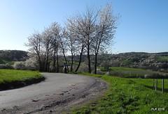 DSCN0375 (studio matahari lutong) Tags: blue sky bavaria spring ride tara maureen fruehling spessart mainfranken