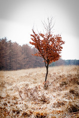 A tree that tries...! (sebastiaan.dewolf) Tags: nature three fields veluwe 6d