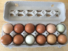 Beautiful eggs from Tassot Apiaries (htomren) Tags: food farmersmarket eggs phonepics groceries