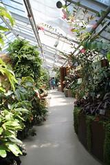 IMG_2457 (Mercar) Tags: canada garden botanical montreal jardin greenhouse botanic botaanikaaed qubeck