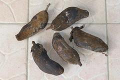 Adansonia digitata (Ben Caledonia) Tags: nouvellecalédonie newcaledonia adansonia adansoniadigitata