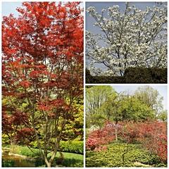 Ladew Gardens ~ tree collage - HTMT! (karma (Karen)) Tags: trees gardens collages blossoms maryland mmm monkton nrhp ladewtopiarygarden harfordco