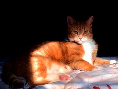 ShadowCat (mjfrank11) Tags: cats sun sunlight animal animals cat shadows catmoments