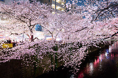 Blooms Dance (H.H. Mahal Alysheba) Tags: flower tree japan night river cherry tokyo nikon cherryblossom sakura nikkor sprint afs d800 2485mmf3545