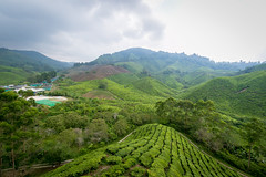Amidst the rolling hills and tea leaves (stratman (2 many pix and busy)) Tags: landscape mountainside cameronhighlands ultrawide teaplantation brinchang efs1022mmf3545usm canonphotography bohteafactory flickrelite cmwdgreen eos7dmarkii