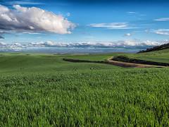 Mar verde ( green sea ) . ( Explorer 15-04-2016 ) (mentaymenta) Tags: espaa verde green primavera clouds spain cereal nubes trigo castilla cebada trigal