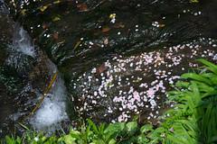 20160410-DSC_7513.jpg (d3_plus) Tags: sky plant flower history nature japan creek trekking river walking temple nikon scenery shrine bokeh hiking kamakura fine daily bloom  28105mmf3545d nikkor    kanagawa   shintoshrine   buddhisttemple dailyphoto sanctuary   thesedays kitakamakura  28105   fineday    28105mm  holyplace historicmonuments  zoomlense ancientcity         28105mmf3545 d700 281053545 nikond700  aiafzoomnikkor28105mmf3545d 28105mmf3545af aiafnikkor28105mmf3545d