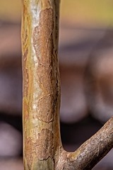 By Hook (brev99) Tags: branch bokeh d7100 ononesoftware nikviveza tamron180f35 perfecteffects9