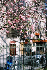 Marais in flowers (lucapascotto) Tags: paris film 50mm t3 manualfocus analogic filmphotography f17 portra160 manualexposure konicaautoreflex konicahenanon