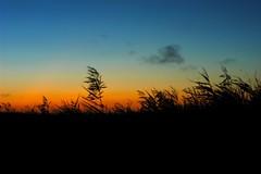 Tolderol Game Reserve sunrise (Rolf Lawrenz) Tags: landscape sunsetsunrise