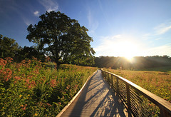Sunset at Longwood Gardens in Pennsylvania (` Toshio ') Tags: sunset usa sun tree nature field america pennsylvania pa boardwalk longwoodgardens toshio xe2 fujixe2