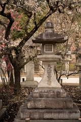 20160302-085659_5K_80 (pya) Tags: kyoto  kitano  tenmangu