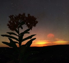 The sleepy sun (BLACK EYED SUZY) Tags: sky flower twilight calm nightfall afterlight lenslight picsart
