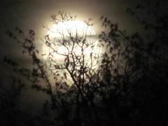 IMG_0042 (MariAnna65) Tags: nacht himmel bume mondaufgang