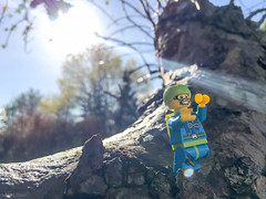 Take a leap of faith, even if you don't want to (120:366) (Lost Star) Tags: lego minifigure day120366 366the2016edition 3662016 29apr16