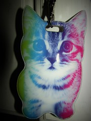 My new lanyard (funnyliberal) Tags: kitty lanyard