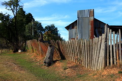 Faulty Fence (Darren Schiller) Tags: old fence timber decay ruin australia newsouthwales derelict decaying pickets hillend