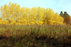 DSC_6029 (Rustam Bikbov) Tags: autumn september 2012    sverdlovskoblast