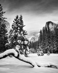 El Capitan & Half Dome, Yosemite National Park, Winter 2015  #4 (bdrameyphotography) Tags: winter snow halfdome yosemitenationalpark elcapitan hdr photomatix nikond600