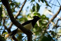 DSC_0915.jpg (el-flaco) Tags: southamerica iguacu