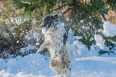 20160116-3388 (Sander Smit / Smit Fotografie) Tags: winter sneeuw delfzijl sneeuwpret slee winterweer