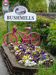 Floral Bike Stand (mdavidford) Tags: pink flowers colour bicycle sign flowerbed bloom speedlimit bushmills stage2 conservationarea violas giroditalia whiteparkroad