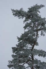 IMG_31052 (IdaAsplund) Tags: trees winter tree season vinter trd rstid