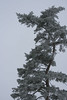 IMG_31052 (IdaAsplund) Tags: trees winter tree season vinter träd årstid