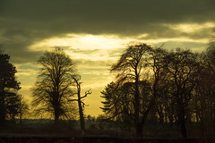 20160116-33_Coombe Country Park_Dusk_Trees Silhoueete (gary.hadden) Tags: trees sunset silhouette dusk calm coombeabbey coombecountrypark coombepark