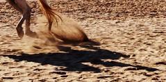 En la arena de Calblanque (Gabriel Navarro Carretero) Tags: shadow horse beach contraluz caballo sand sombra playa arena cartagena airelibre calblanque