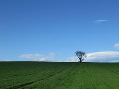 Lights and tree (roberto.pangiarella) Tags: tree verde campagna albero molise larino