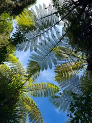 NZ FERNS (carolynthepilot) Tags: travel trees newzealand vacation sky holiday mike nature water beautiful weather islands michael photo published photographer photoshoot natural image hiking getaway postcard ngc silk explore international anchorage nz tropicalisland romantic historical educational kiwi adele abeltasman tranquil touring visa ironbutterfly nationalgeographic traveler waterscape bestphoto romanticgetaway silkstockings goldenwings worldtraveler worldtraveller islandgetaway honeymoondestination vacationdestination getawaydestination romanticdestination nationalgeographicexplorer vacationgetaway carolynbistline carolynthepilot bistine