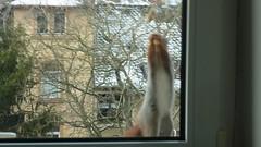 """Doku ...Was hat sie sich jetzt wieder ausgedacht ? ich möchte doch nur an die Nüsse! (flixx-ak) Tags: germany deutschland squirrel eichhörnchen 2016 flixxakoffenbachammainhessen """"anvormeinemfenster"""" r0018703"""