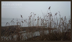 Substrata (Anakuklosis) Tags: winter wild lake nature fog landscape landscapes sony lakes foggy friuli winterscape naturephotography naturelover lightwater lakescape friuliveneziagiulia sandaniele naturebeautiful foggylandscape substrata naturephotograph lovelake sonyxperia lakelove sonyxperiaz sonyxperiaz1
