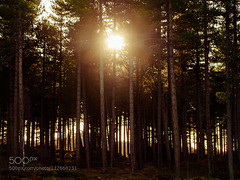 The Last Touch (Dmytro Cherkasov) Tags: trees light sunset sun forest evening mysterious rays 500px ifttt