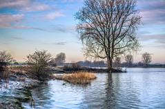 273 Kelvin (Ingeborg Ruyken) Tags: morning winter sky cold tree river flickr frost january boom lucht maas dropbox januari ochtend meuse koud vorst rivier 2016 floodplain empel natuurfotografie riverforeland maasuiterwaarden 500pxs