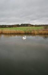 John Constable Trail, Essex, UK (lemonteajunkie) Tags: uk sky nature water field river reeds landscape countryside horizon trail essex flatford johnconstable