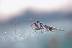 Morning Times... (karthik Nature photography) Tags: color macro nature animals closeup canon garden mantis wildlife insects prayingmantis naturephotography macrophotography closeupphotography macroworld wildlifephotography animalworld canonphotography gardenphotography insectphotography macrolife wildlifeindia canon5dmark3 macrolifeinindia