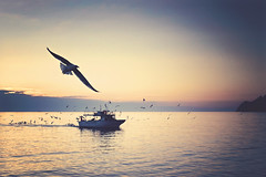 Today where flights? (alessmile ) Tags: sea seagull fishingboat