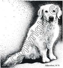 rosie copyright (myfanwy.brewster) Tags: dog pets texture animal fur golden labrador tail wallart retriever whiskers paws farmanimals stylized handdrawn pointillism petportraits commissions panandink welshart