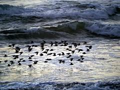 Flock of Birds (Cepreu K) Tags: challengeyouwinner
