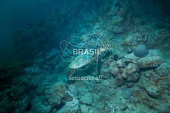 NE_Abrolhos0030 (Visit Brasil) Tags: horizontal brasil fauna natureza bahia nordeste detalhe externa abrolhos semgente subaqutica diurna